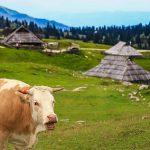 Velika Planina, la più bella passeggiata delle Alpi Giulie