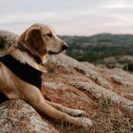 20 consigli per visitare la Slovenia con un cane
